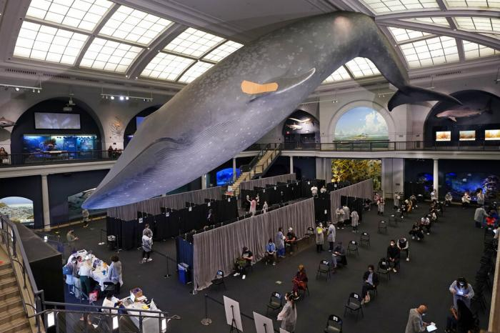 People rest in the observation area, at right, after receiving COVID-19 vaccinations under the 94-foot-long, 21,000-pound model of a blue whale, in the Milstein Family Hall of Ocean Life, at the American Museum of Natural History.